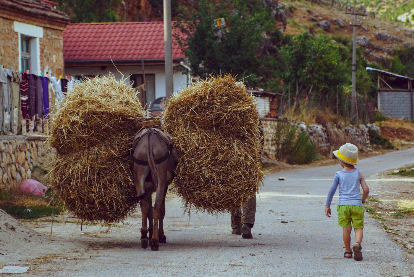 Zu sehen ist wie ein Esel schwer mit Heu beladen durch die Straßen eines kleinen Dorfes läuft. Luk läuft neben ihm her.