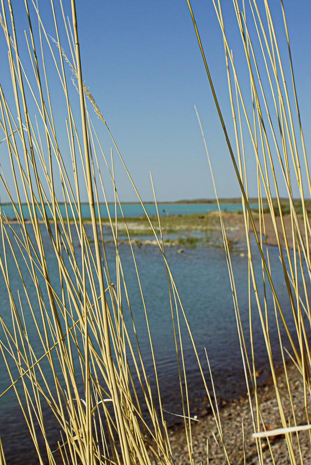 Der Blick geht durch vertrocknet das Schilf auf dem Balkash See
