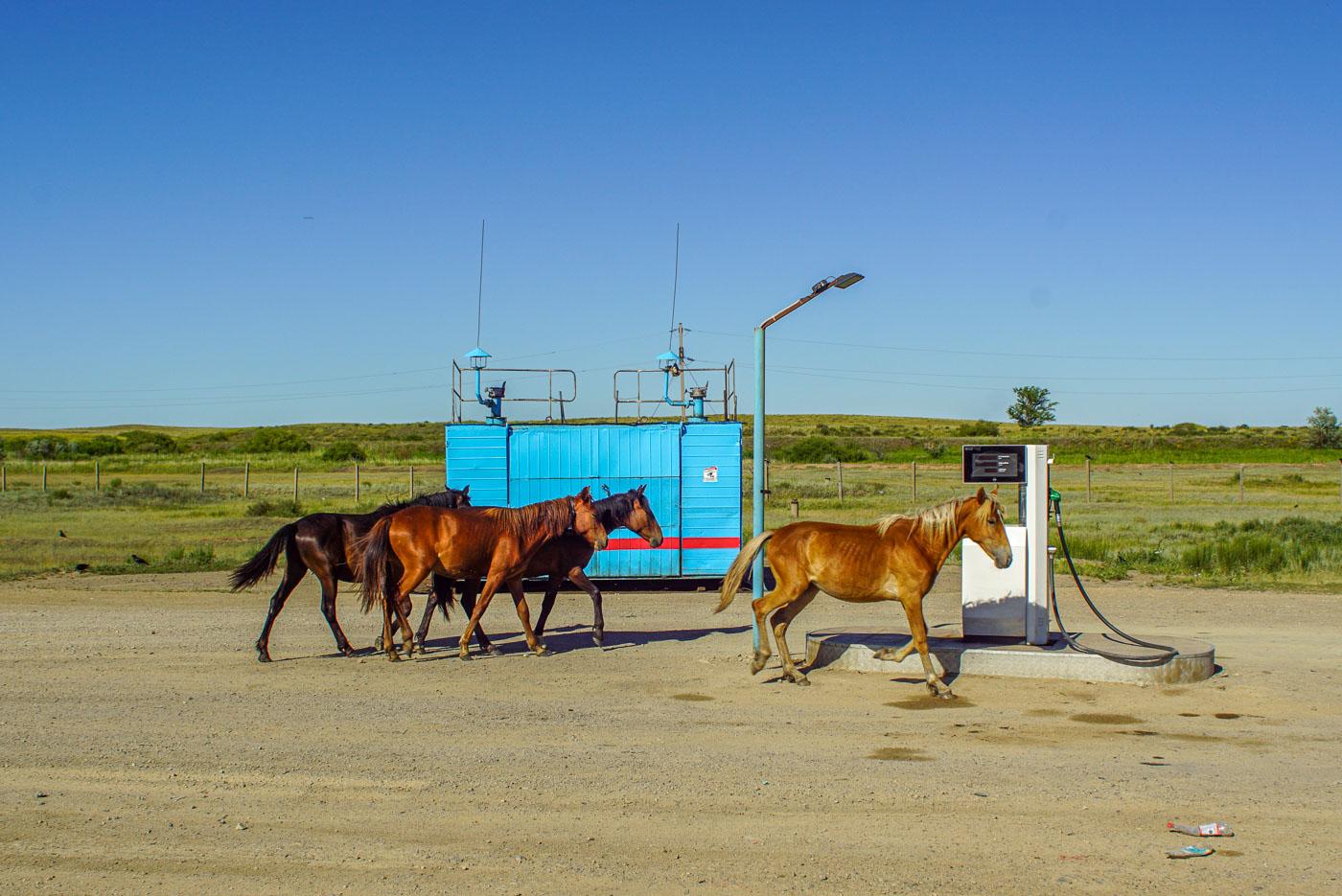 Zu sehen ist eine kleine Tankstelle mit nur einer Säule in Kasachstan. Ganz dicht traben vier braune Pferde vorbei.