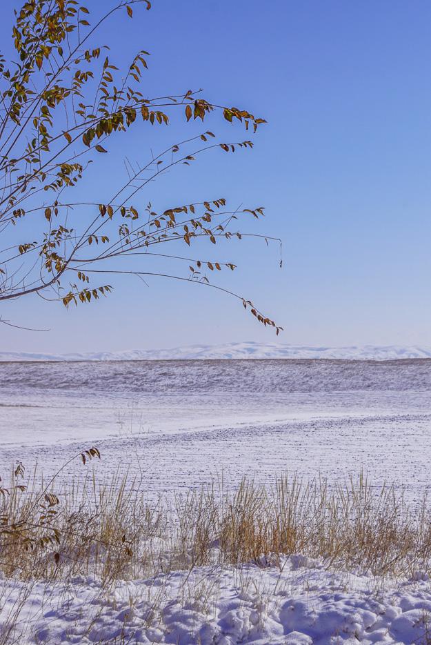 Im Vordergrund sind ein kleiner Baum und Gräser zu sehen die durch den Schnee Luken im Hintergrund erstreckt sich eine weite Fläche schneebedeckter Steppe ganz hinten am Horizont erheben sich schneebedeckte Berge.