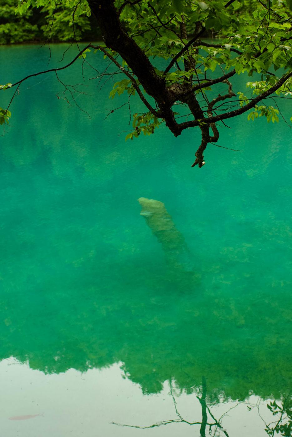 Blick auf türkis grünes Wasser. Im Zentrum ist ein abgestorbenem Baumstumpf mit Mineralablagerungen unter Wasser zu sehen.