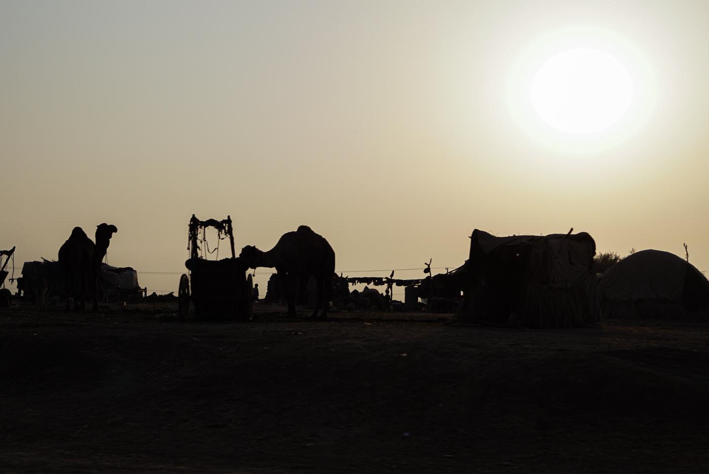 Zu sehen sind zwei Kamele neben einem Gespann. Der Vordergrund ist so gut wie schwarz wodurch sich die Konturen der Kamele und Gegenstände vor dem hellen Himmel klar abzeichnen. In der linken oberen Ecke ist die untergehende Sonne zu sehen.