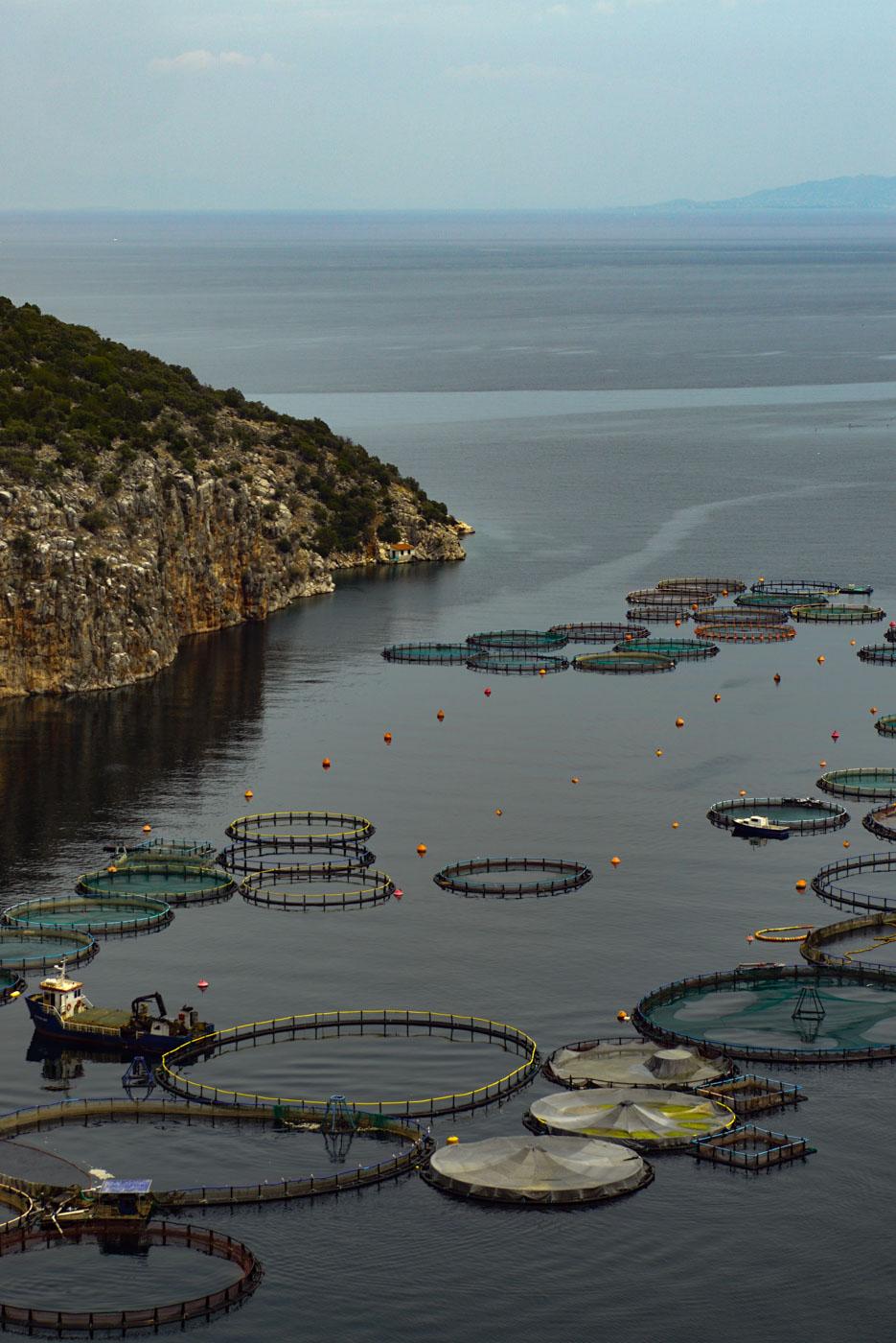 Blick in eine Bucht mit vielen Runden Fischfarmen