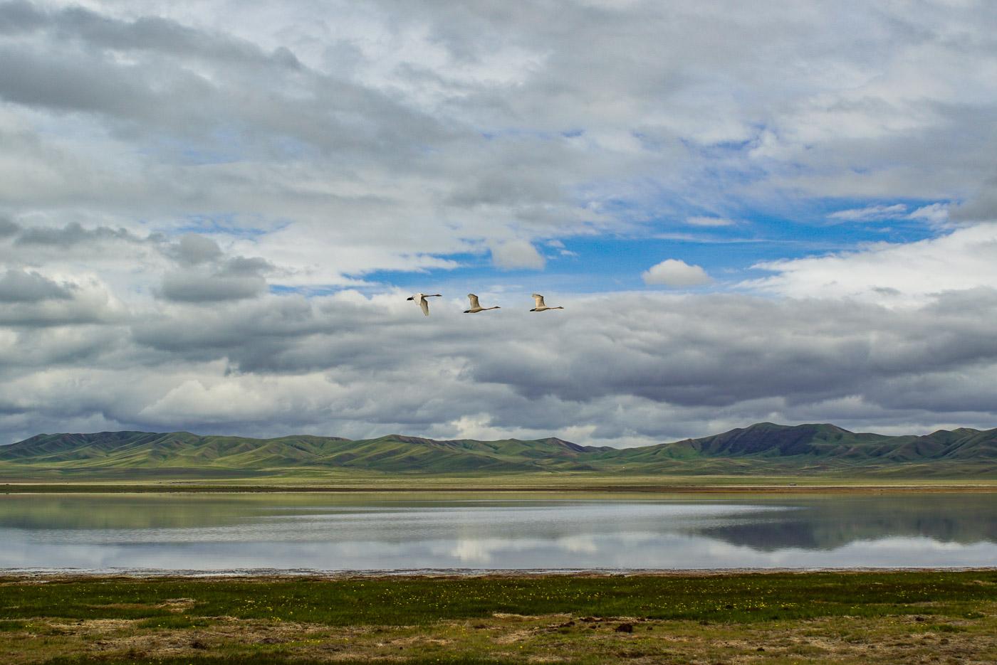 Drei Schwäne fliegen hintereinander über den tokul lake in diesem Spiegel sich der teilweise bedeckte Himmel Punkt im Hintergrund erheben sich die grüne grün bewachsenen Berge.